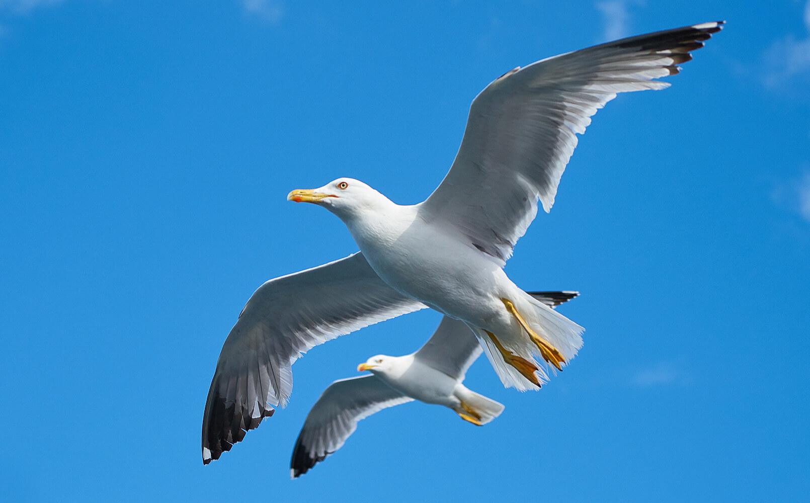 Птицы в Солнечном Береге