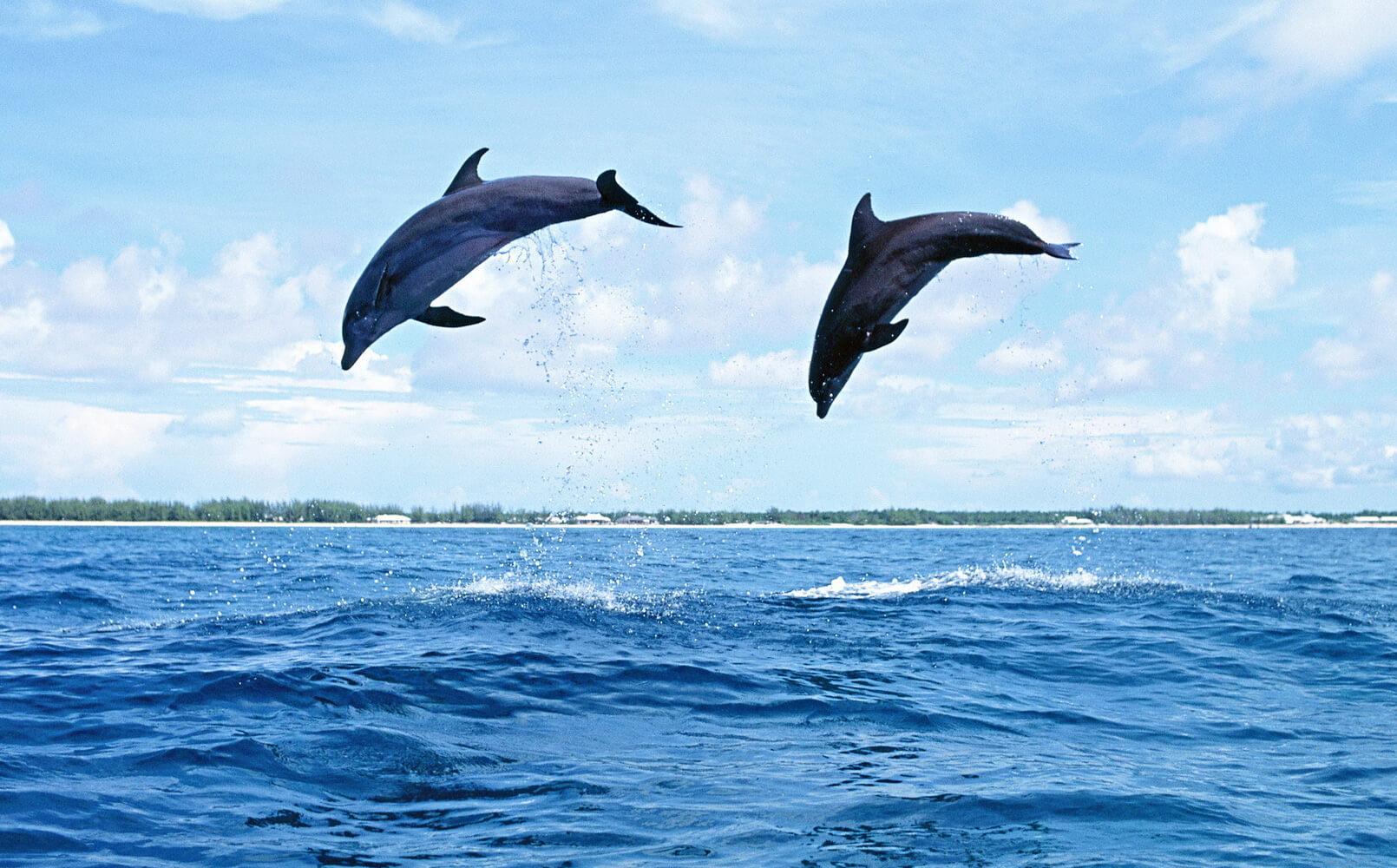 В Чёрном море дельфины