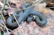 Змеи в Солнечном Береге