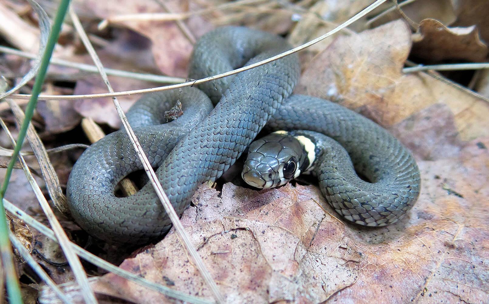 фото змей в природе кто